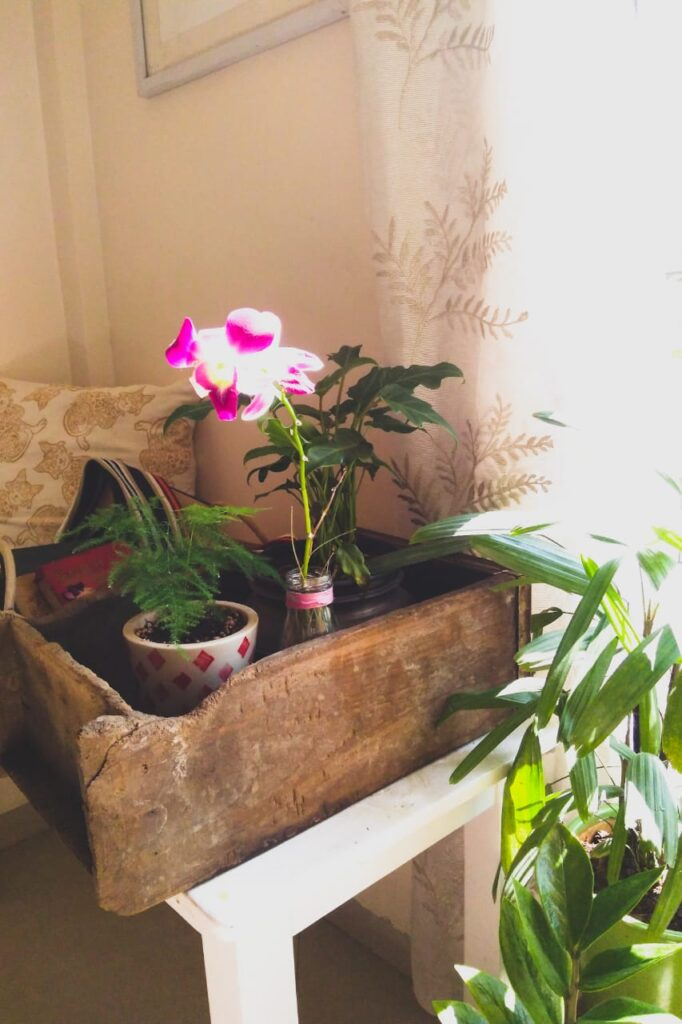 green plants around Sharon's home office | office idea