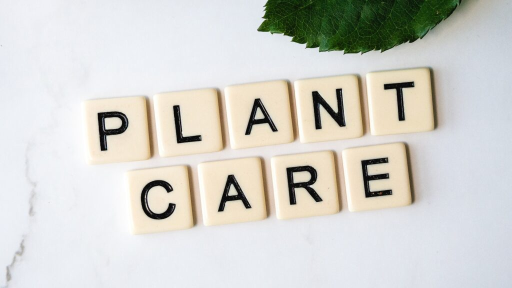 Plant care tips for growing healthy houseplants