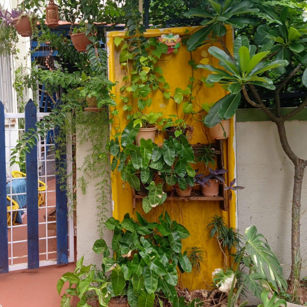 A yellow painted door, and plant-laden shelves at other side of the gate | Leesha's Pune home | Thekeybunch