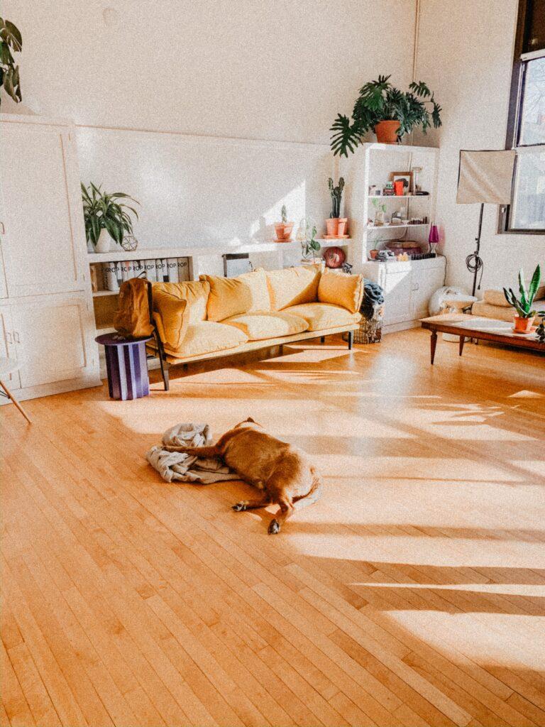 Dry, carpet free floors  Monoon decor and living edit
