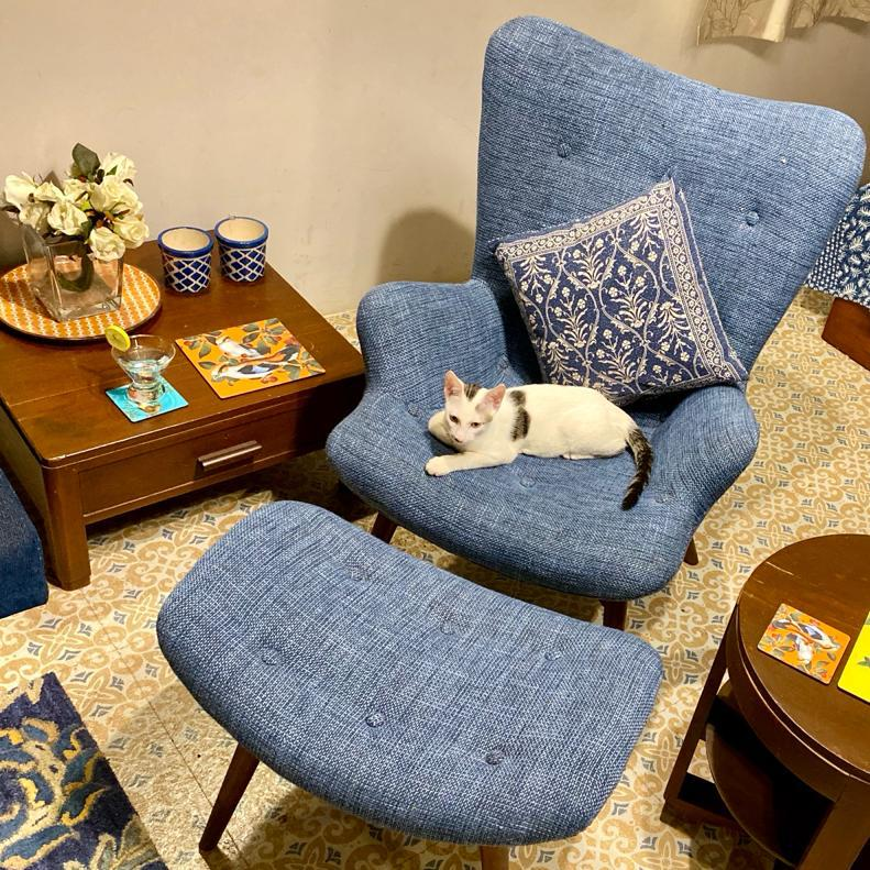 Villa Rashmi - A Heritage Gem in Mumbai   The cute cat sitting on the chair at the private family room   TheKeybunch decor blog