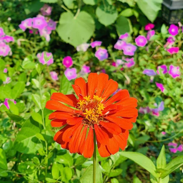 Villa Rashmi - A Heritage Gem in Mumbai   Flower blooms in the garden   TheKeybunch decor blog