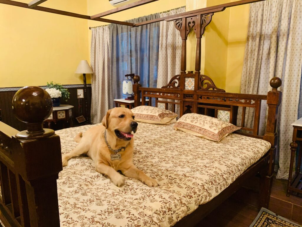 Villa Rashmi - A Heritage Gem in Mumbai   Cute dog sitting on bed   TheKeybunch decor blog