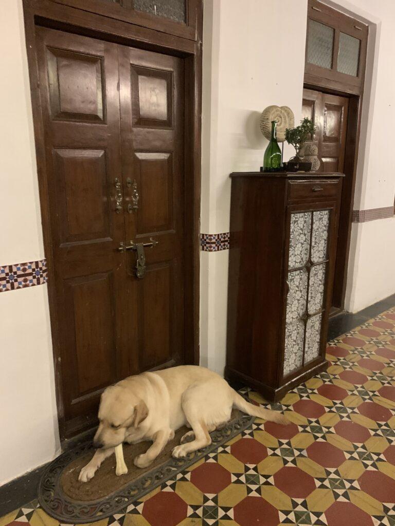 Villa Rashmi - A Heritage Gem in Mumbai   The dog sitting at the door of the room in the verandah   TheKeybunch decor blog