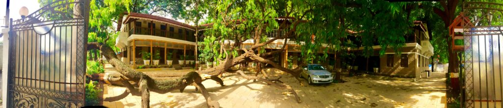Villa Rashmi - A Heritage Gem in Mumbai   The tree fell during the monsoon   TheKeybunch decor blog