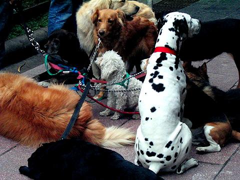 BsAs Dogs