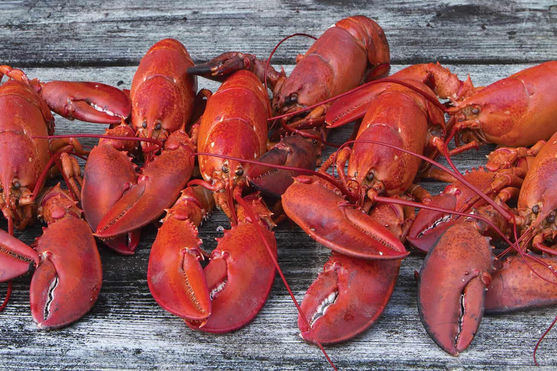 Lobsters_2_web