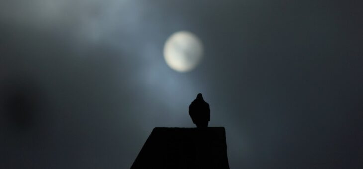New poem 'Dark of the Moon' up at Mookychick