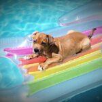 Dog Day of Summer Heat 'N Eat