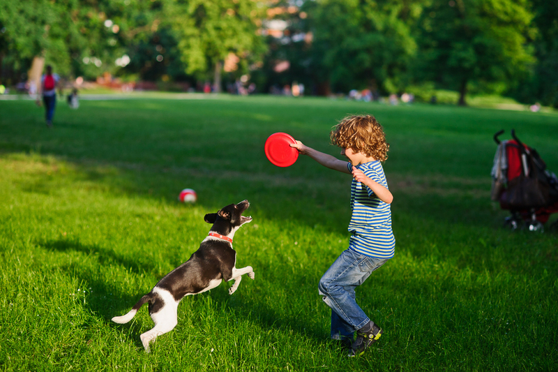 boy plays Frisbee in the park with dog