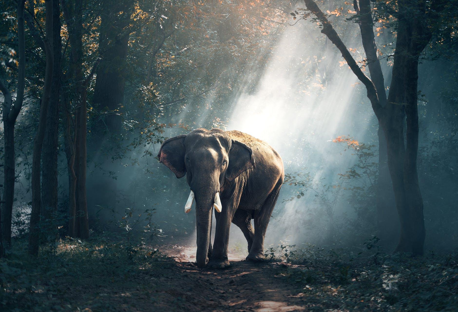Wild Animals Population Data