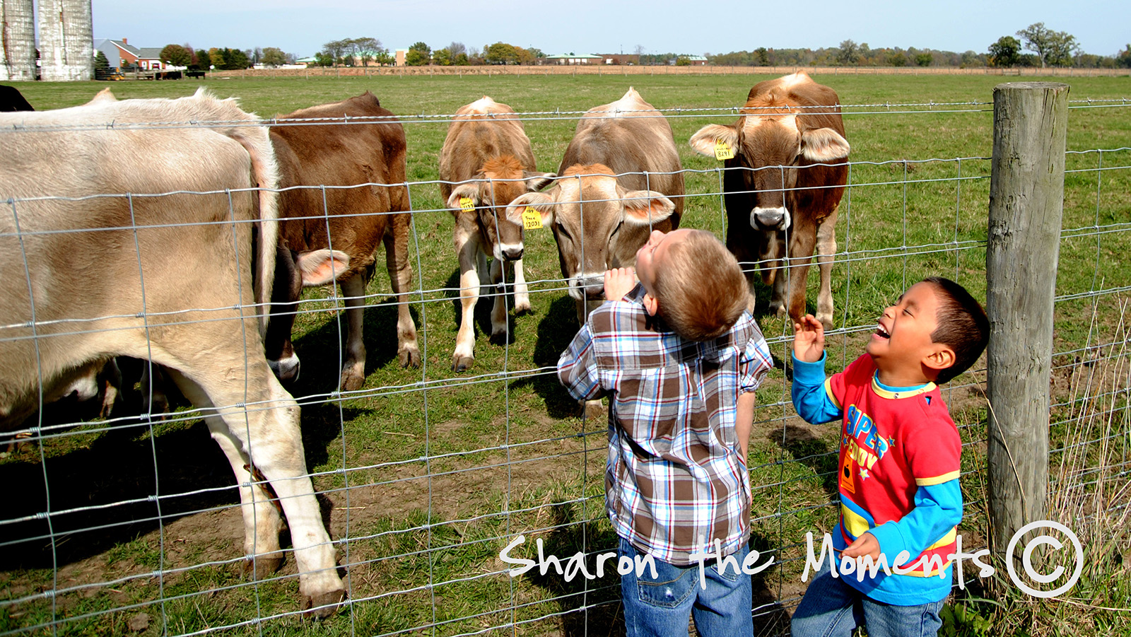 Cows and Boys being Boys at Orchard and Company Fall Outing|Sharon the Moments blog