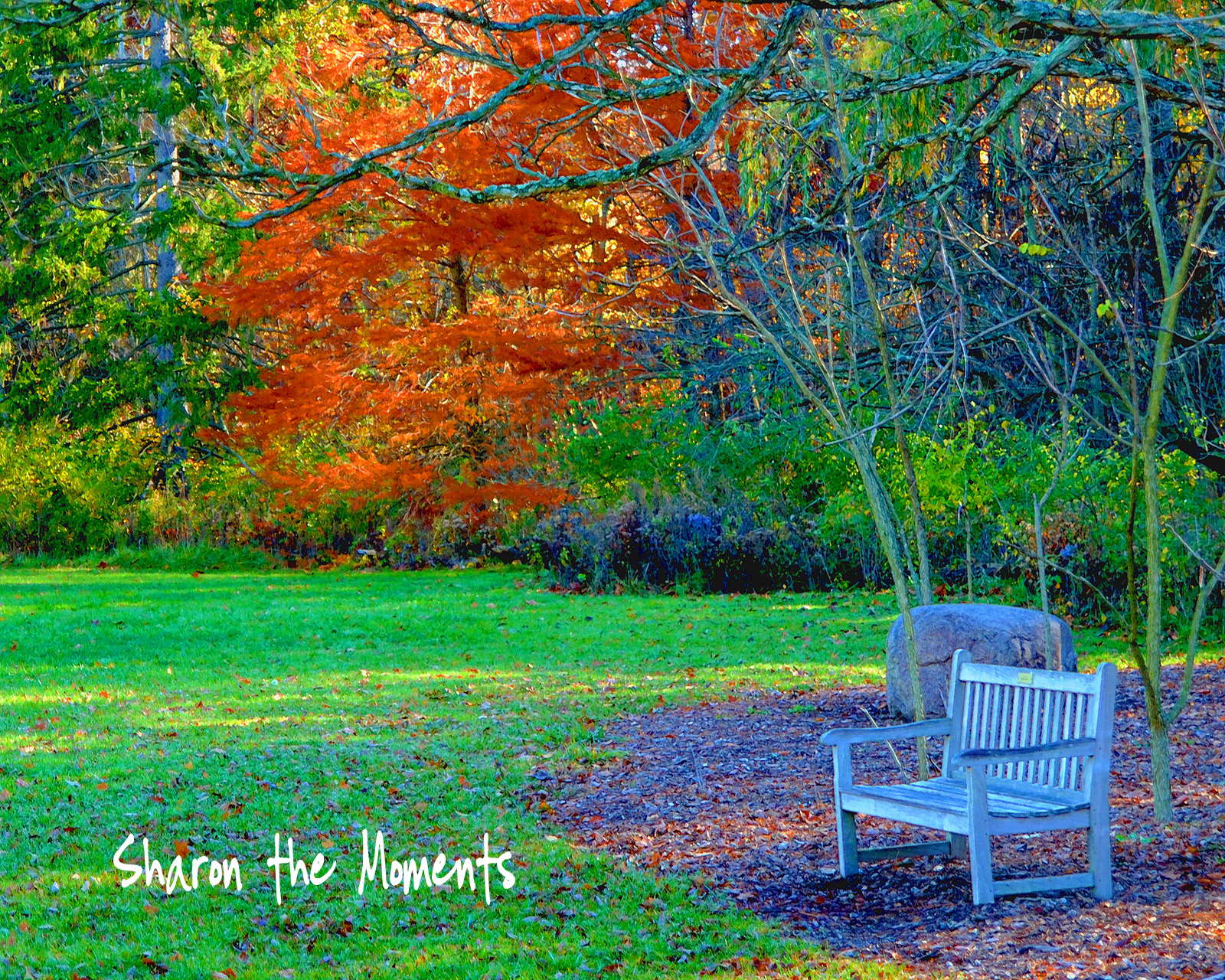 Inniswood Metro Gardens autumn color Sharon the Moments blog