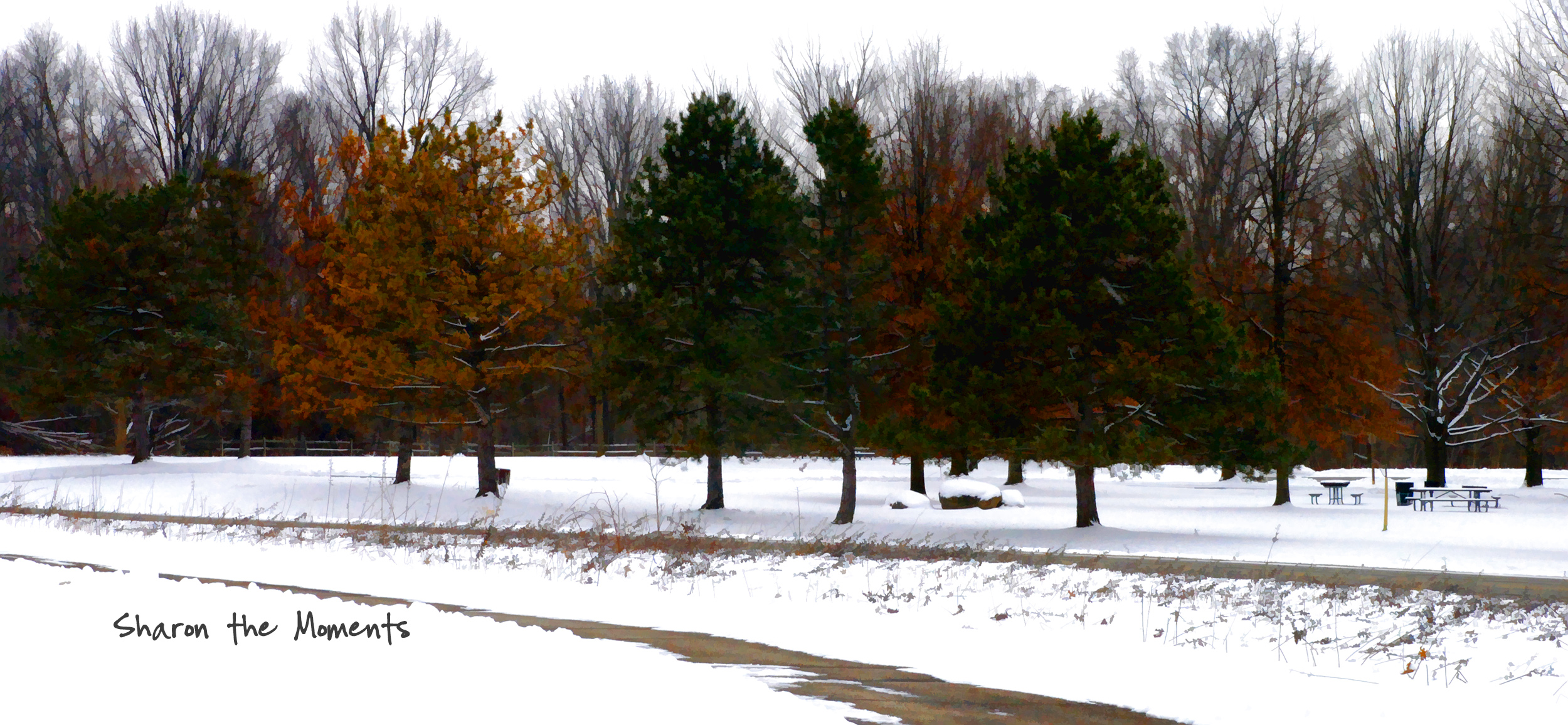 Favorite Photo Friday Sharon Woods Metro Park Snowy Winter Day|Sharon the Moments blog