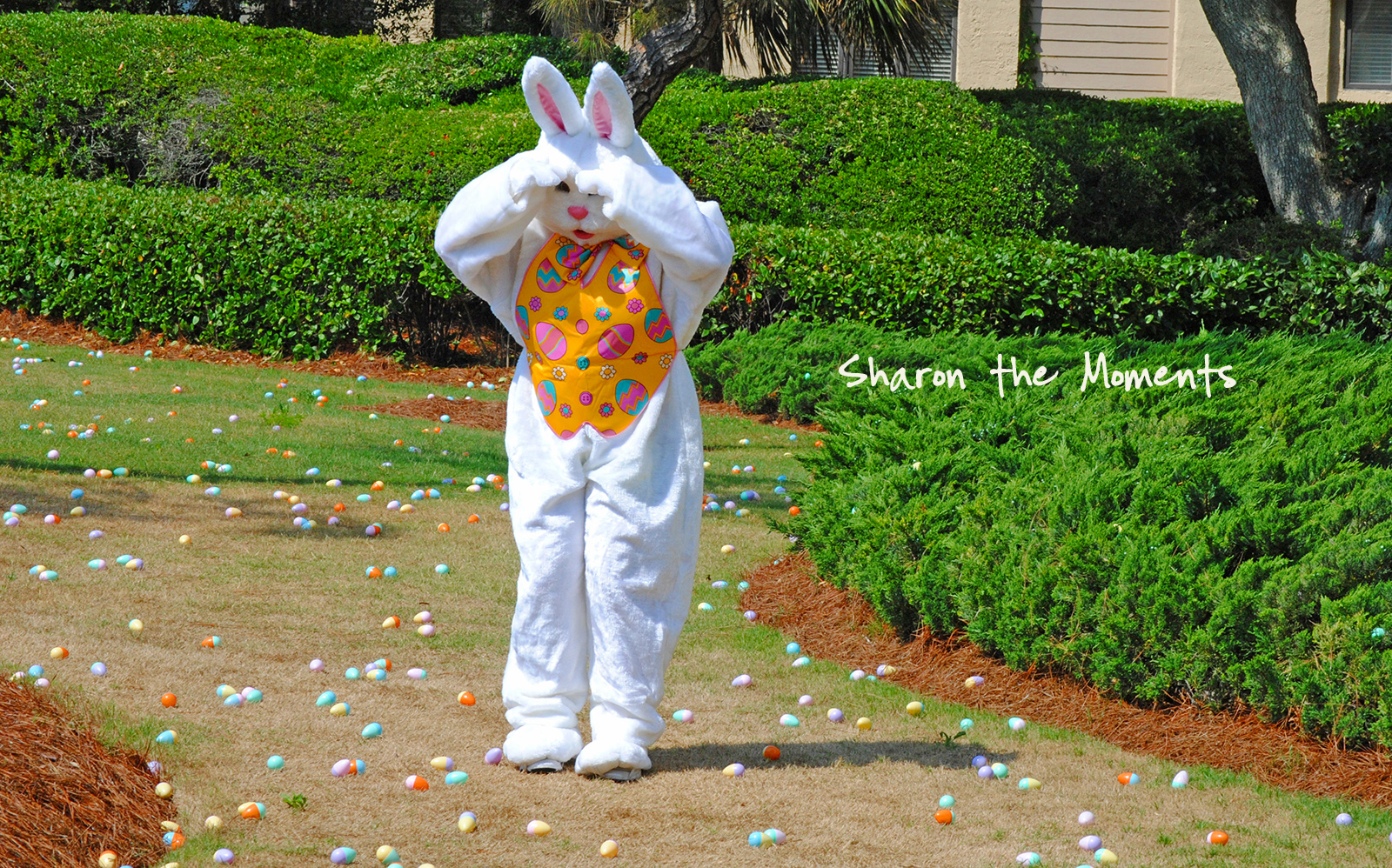Hodgepodge Wednesday Easter|Sharon the Moments