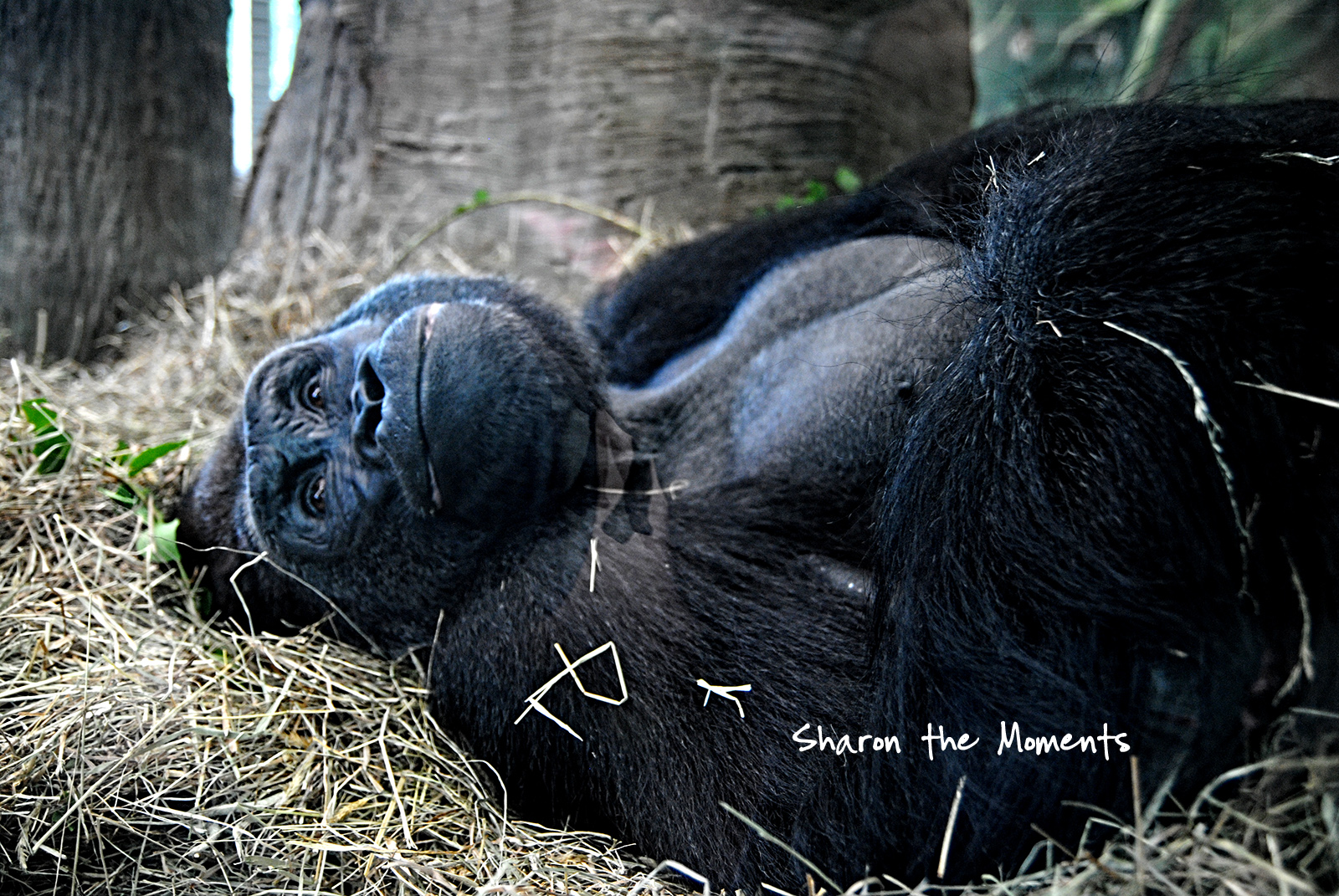 Monday Monday Spring Happy Mothers Day Columbus Zoo|Sharon the Moments blog