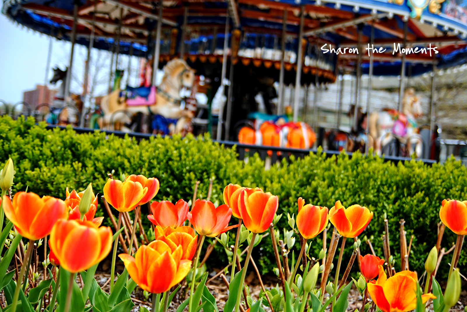 Monday Monday Spring Columbus Commons Downtown Columbus Ohio|Sharon the Moments blog