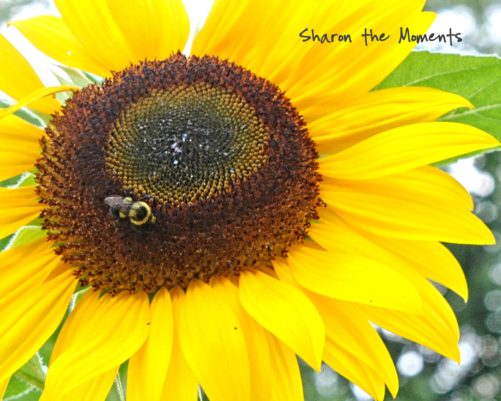 Favorite Photo Friday Summer Sunflowers Sharon the Moments blog