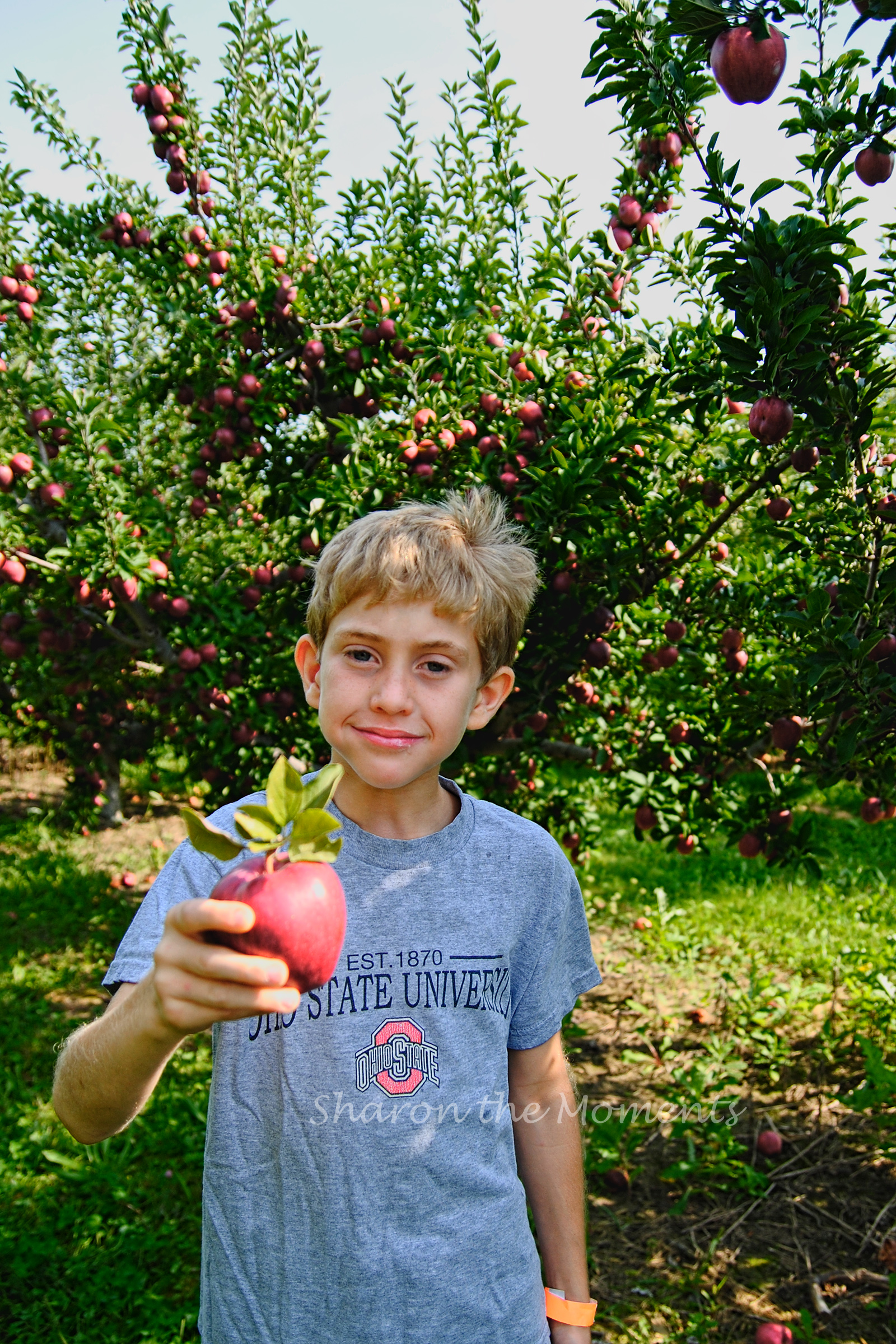 September Weekend at Lynd Fruit Farm Apple Orchard| Sharon the Moments Blog