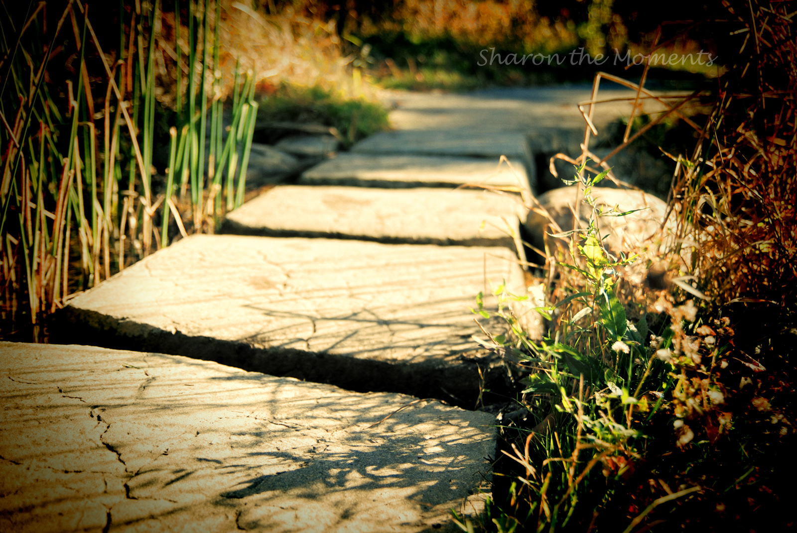Favorite Photo Friday ... Stepping Out|Sharon the Moments Blog