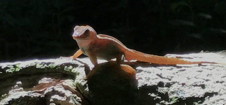 Florida is… Lizards