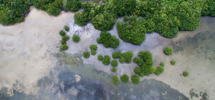 FLORIDA IS… Mangroves
