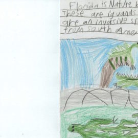 Florida is the wildlife that inhabits it. For example, green iguanas as showed above.