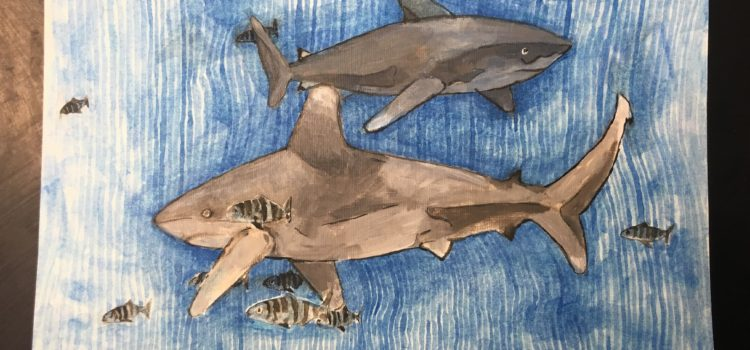 Oceanic Whitetips