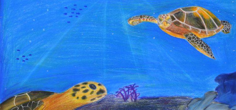 Florida is the Hawksbill Sea turtle