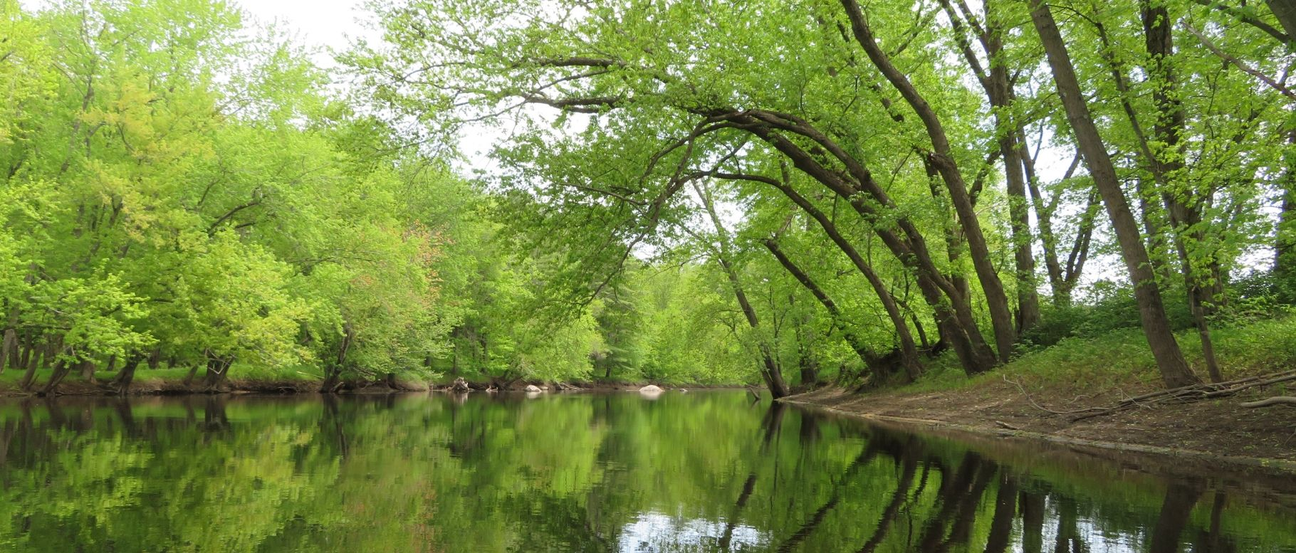 Reflecting Trees in a Brook