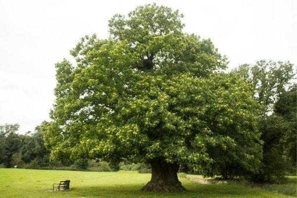 Healthy Balanced Tree