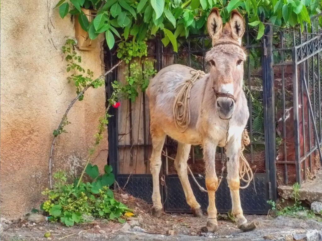 piana donkey