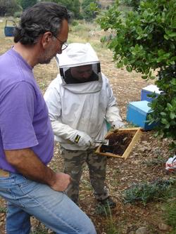 Beekeeper with honeybees