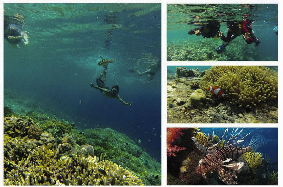 Bali Private Snorkeling Trip to Menjangan Island