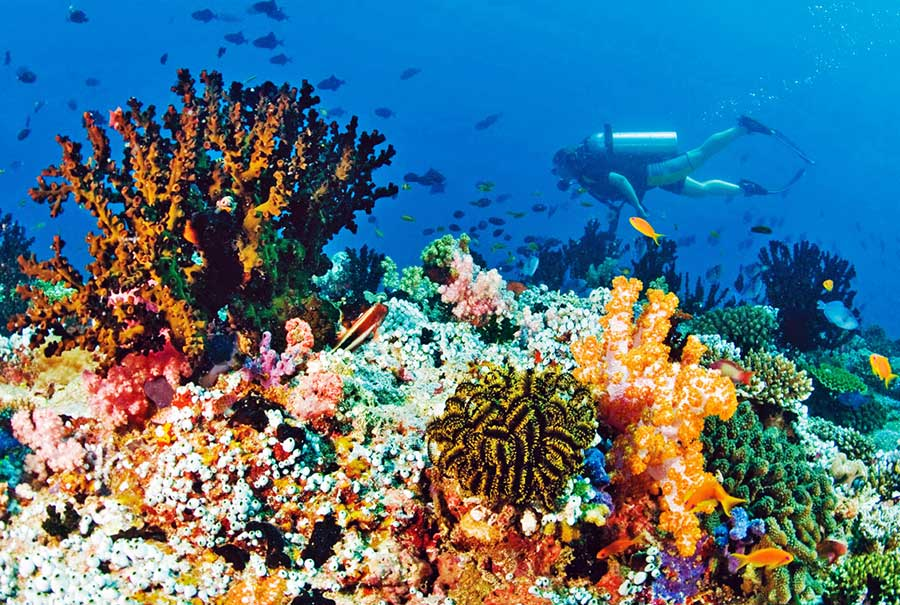 Double Dive at Blue Lagoon combination sightseeing tour eastern Bali - Bali Safest Driver - Bali Driver