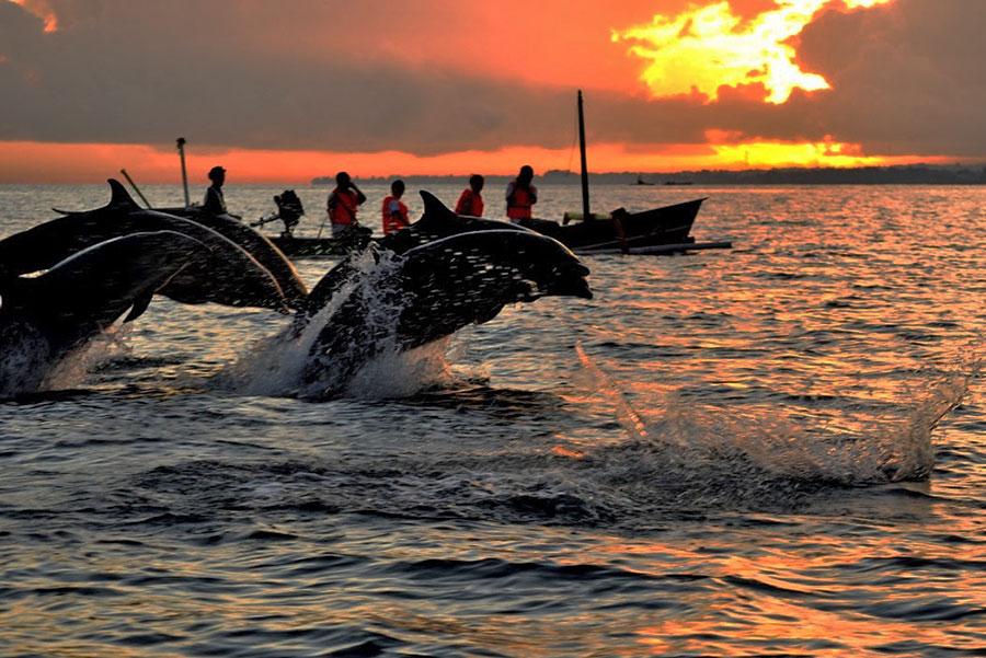 Sunrise Dolphin at Lovina Beach - Bali Safest Driver