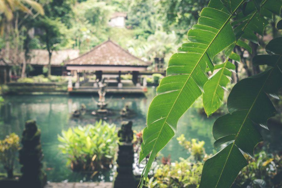 Bali Driver and Bali Private Tour