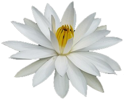 Bali Private Tours Bali Safest Driver Logo Flower