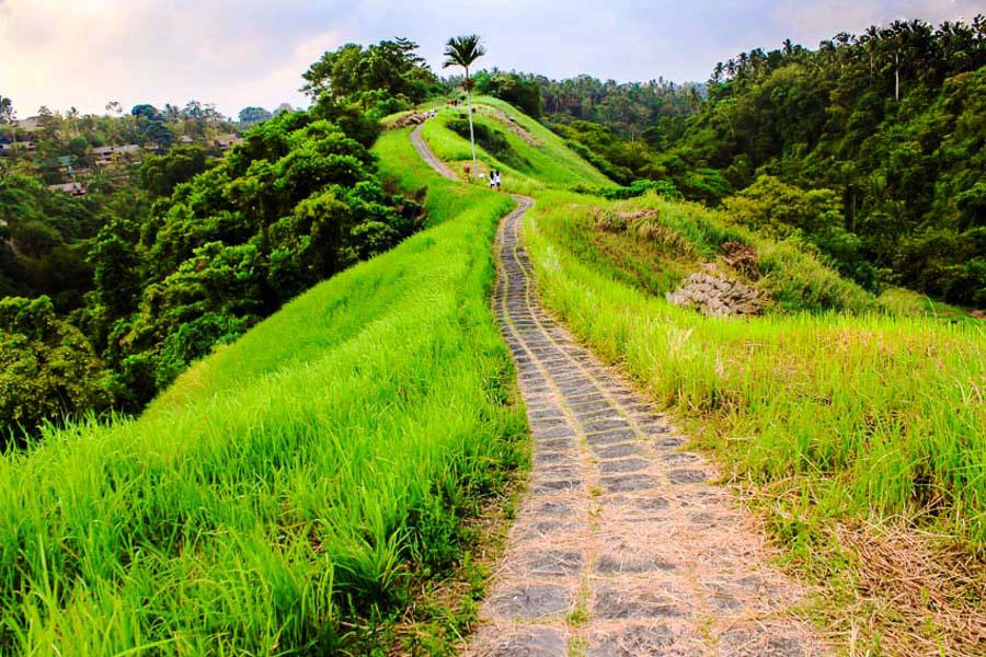 Bali Safest Driver Campuhan Ridge Walk Bali Safest Driver Tour