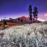Kasna Garden : Edelweiss From Bali