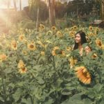 Viral Sunflower Field In Tabanan