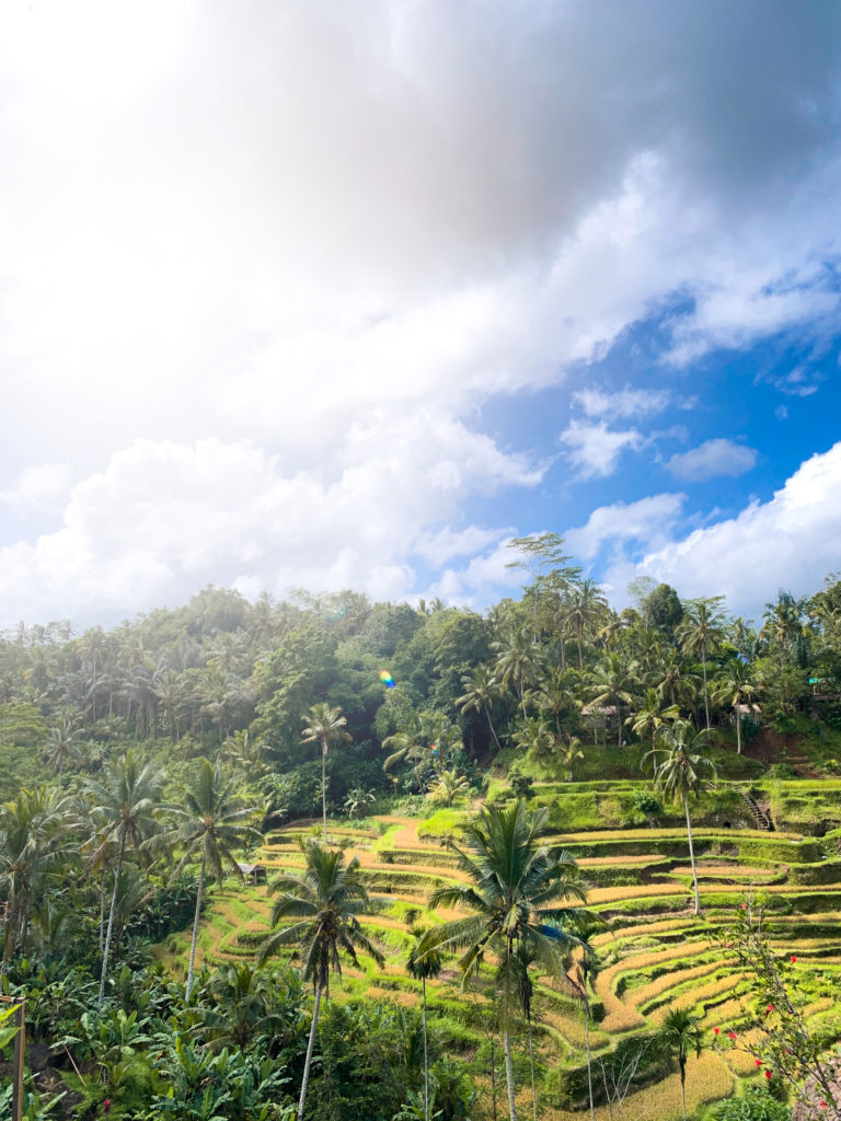 Tegalalang Rice Terrace Ubud Bali – Entrance fee and How to get Location.