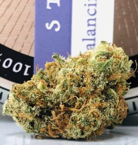 bud of angus strain by grow west in front of grow west