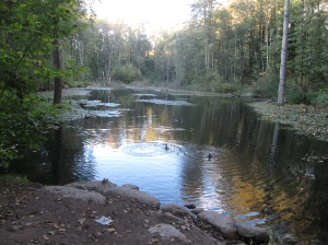 Avalon Pond is part of Everett Crowley Park, which was built on the former Kerr Street Dump.