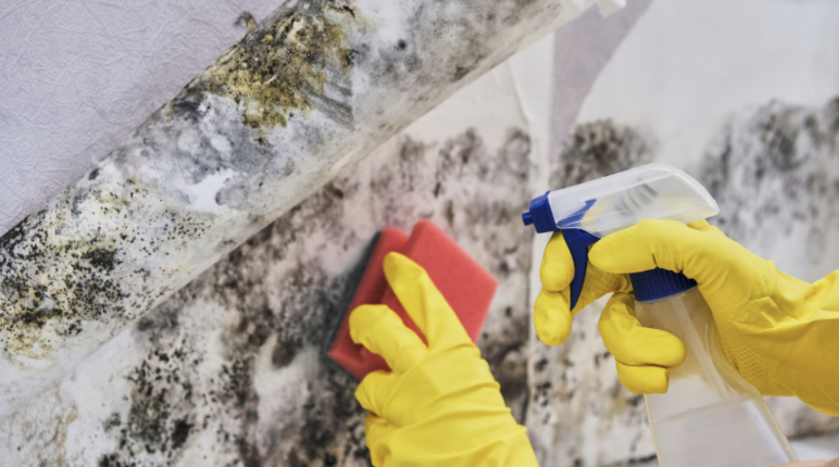 The Mold Treatment Process
