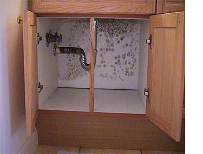 Mold Under Sink