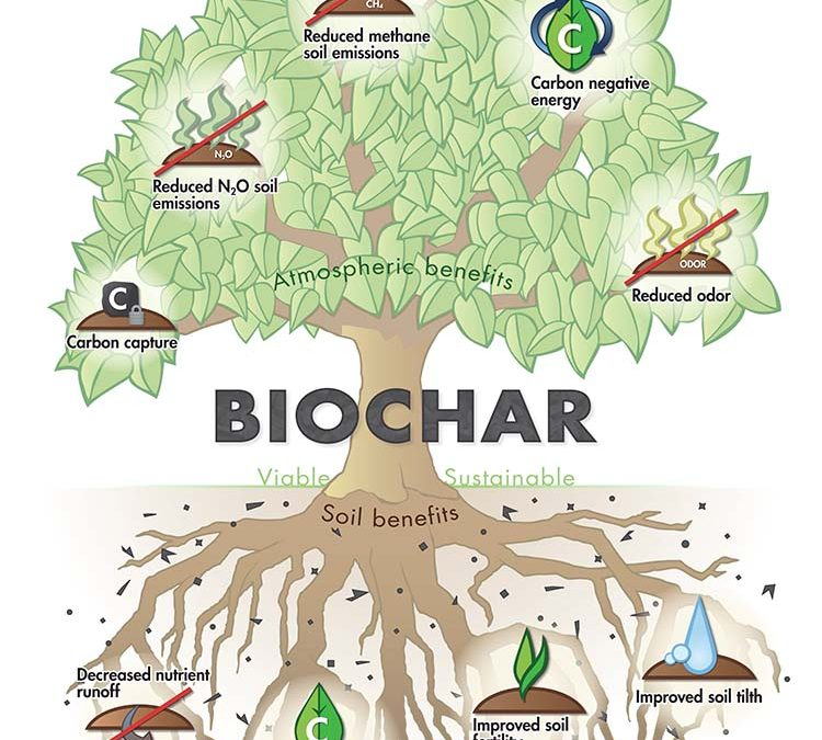 Biochar – Expanding Our Economic Choices