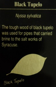 BlackTupelo