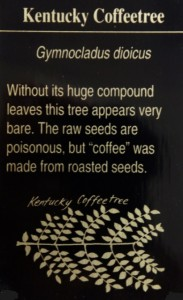 KentuckyCoffeetree