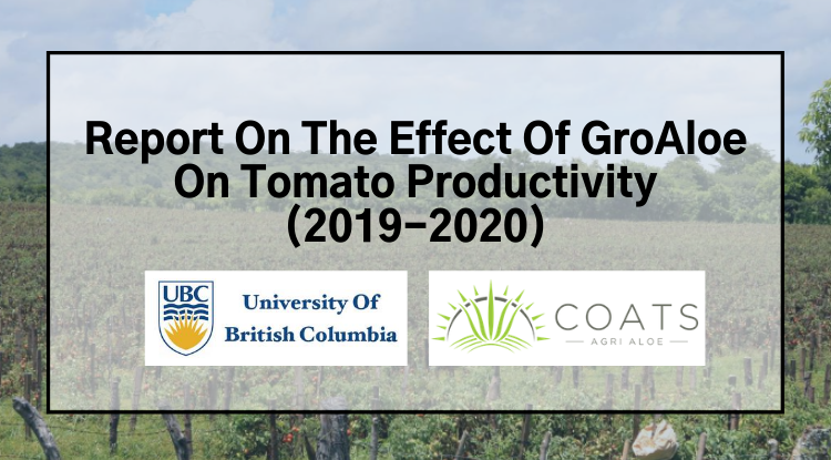 Report On The Effect Of GroAloe On Tomato Productivity